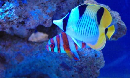 CITES extend project looking at marine fish