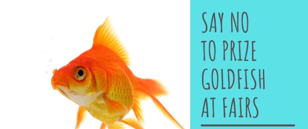 Say no to goldfish at fairs, says OATA