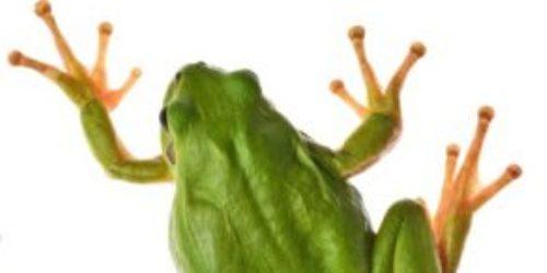 Importing reptiles, amphibians & invertebrates