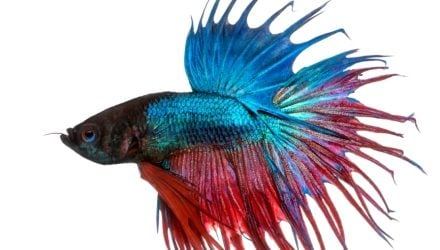 Advice on selling betta fish in pet shops