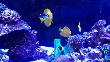 EU coral ban averted