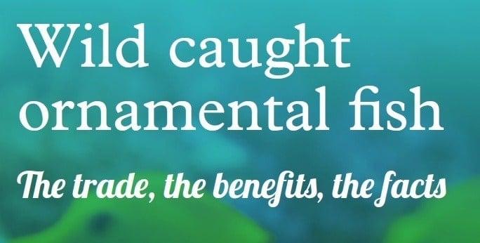 Read our Wild Caught Ornamental Fish report