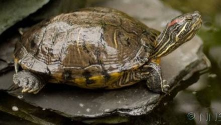 Terrapins, plants & animal exhibits – we have our say