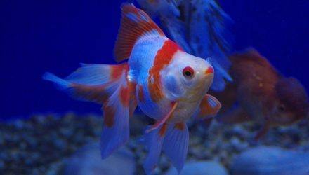Animal cruelty sentence questioned over fish exclusion