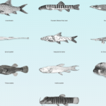 Search is on for the '10 most wanted' freshwater fish