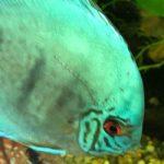 New qualification to lose ornamental fish focus