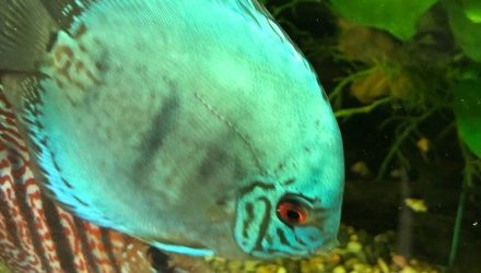 New qualification to lose ornamental fish focus