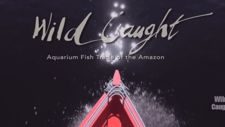 Documentary examines wild caught fishery in Brazil