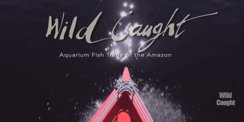 New documentary on wild caught fish